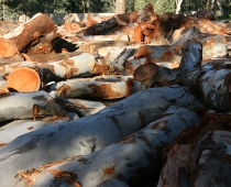 mobile-log-splitting-firewood-adelaide-barossa-11